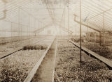Baker Brothers Greenhouse
