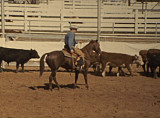 National Cutting Horse Assocation Contest